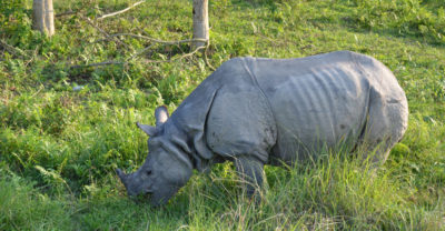 Kathmandu Chitwan Wildlife Tour